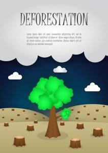 Deforestation Essay
