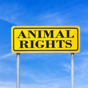 Essay Writing on Animal Rights